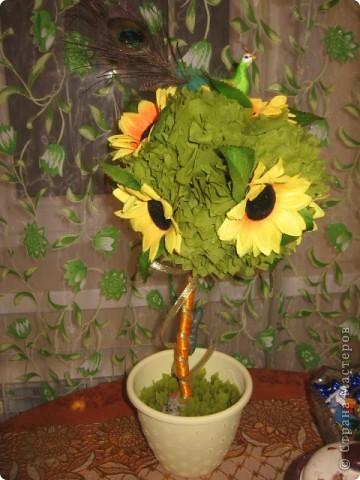 Мое солнечное деревце фото 1
