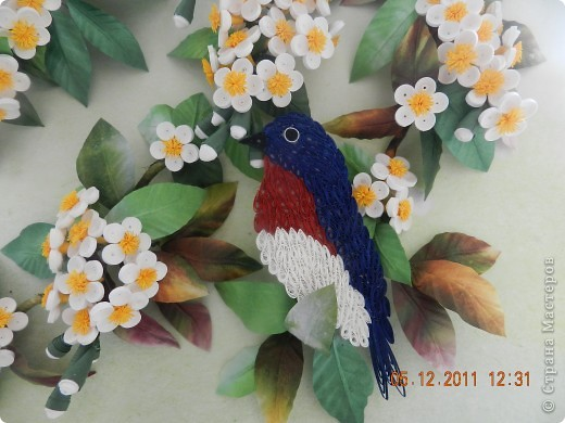 птичка фото 4
