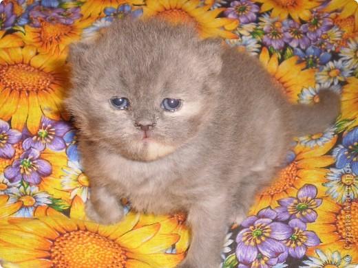 Любимица всей нашей семьи - персидская кошка Мася. Ей 1г.9мес. фото 12