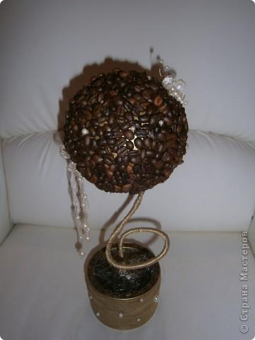 Я тоже заразилась этими чудными деревьями. Вот такое кофейное деревце вырасло у меня. фото 2