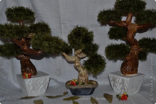 Всем добрый день. С наступающим Вас Новым годом!!! Всех рада видеть у себя в гостях. Кто заинтересовался моими деревьями приятного просмотра. фото 2
