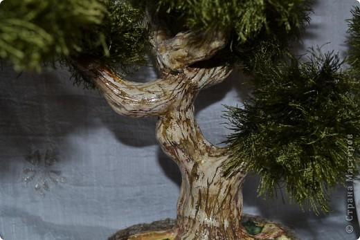 Всем добрый день. С наступающим Вас Новым годом!!! Всех рада видеть у себя в гостях. Кто заинтересовался моими деревьями приятного просмотра. фото 5