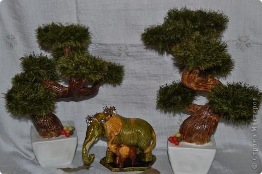 Всем добрый день. С наступающим Вас Новым годом!!! Всех рада видеть у себя в гостях. Кто заинтересовался моими деревьями приятного просмотра. фото 1