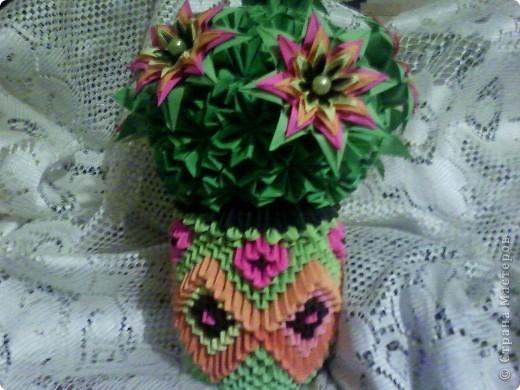 Цветы на кактусе. фото 1