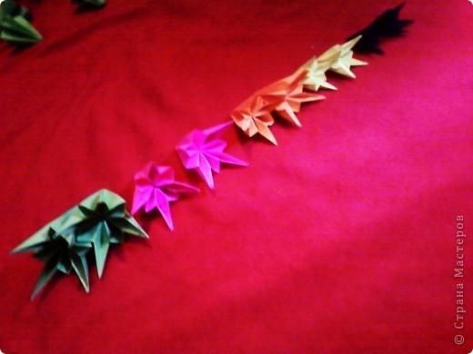 Цветы на кактусе. фото 5