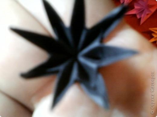 Цветы на кактусе. фото 7