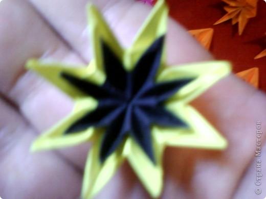 Цветы на кактусе. фото 8