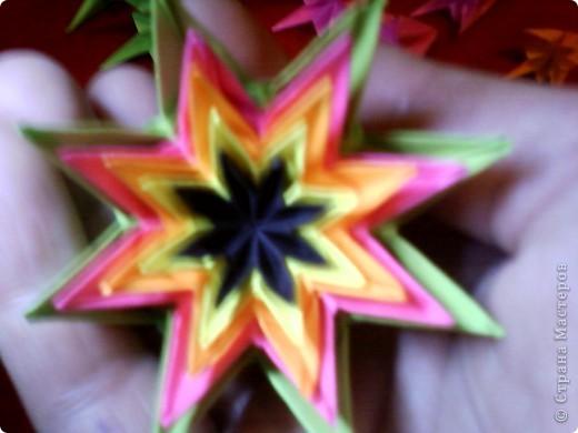 Цветы на кактусе. фото 11