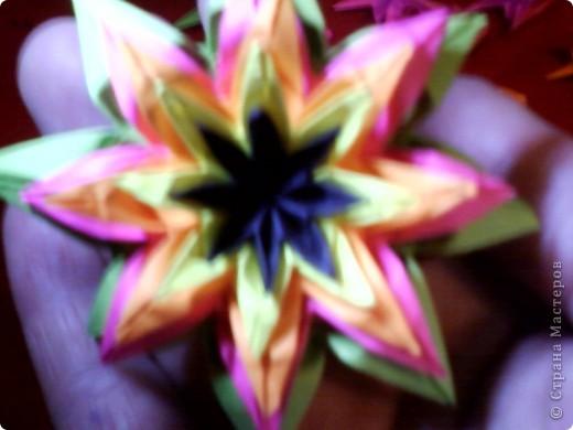 Цветы на кактусе. фото 12