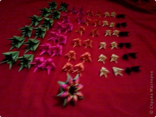 Цветы на кактусе. фото 13