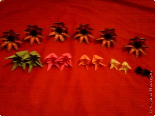 Цветы на кактусе. фото 14