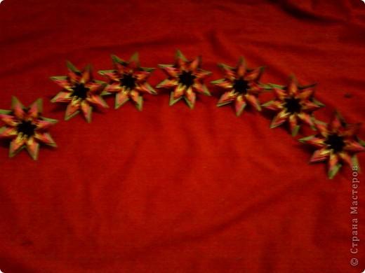 Цветы на кактусе. фото 15