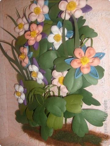 Всем известная аквилегия (водосбор) у разных народов имеет свои названия, которые связаны с фольклорными повествованиями, мифами и легендами. Так, американцы называют этот цветок голубкой Колумбиной, и считают его символом супружеской измены, а точнее - символом женской неверности... фото 4