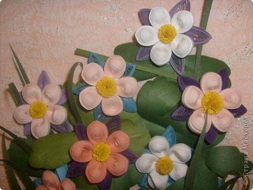 Всем известная аквилегия (водосбор) у разных народов имеет свои названия, которые связаны с фольклорными повествованиями, мифами и легендами. Так, американцы называют этот цветок голубкой Колумбиной, и считают его символом супружеской измены, а точнее - символом женской неверности... фото 5
