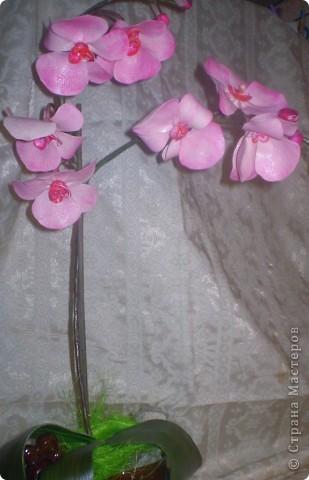 Первые орхидеи!