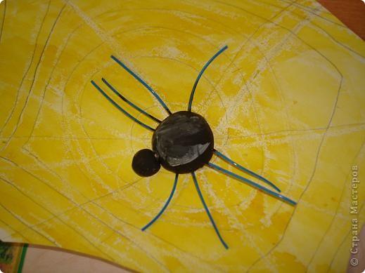 Паутинка и паучки. фото 4