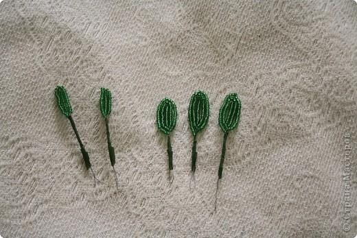 Добрый день, жители страны мастеров. Решила показать свой мк по плетению бамбука. Любому из нас будет очень приятно получить в подарок растение с таким необычным названием, как «бамбук счастья», которое кроет в себе маленькую тайну. Вокруг этого комнатного растения существует множество мифов и легенд и уже само его название вводит в заблуждение. Ведь бамбук счастья не имеет ничего общего с настоящим бамбуком! Это всеми любимое декоративное растение относится к семейству Драценовых. Точнее сказать, бамбук счастья – это драцена Сандера (Dracaena Sanderiana). Китайское обозначение «бамбука счастья» «Fu Gwey Zhu» интерпретируется следующим образом: Fu = богатство Gwey = благородство Zhu = бамбук Этот вид драцены уже на протяжении многих сотен лет считается в Азии символом счастья, здоровья и успеха. Китайцы дарят его по любому поводу: на свадьбу, день рождения, Новый год и т.д. Так, согласно учению Фен-Шуй, 3 стебля драцены Сандера приносят счастье, 5- притягивают энергию и богатство, 7 – здоровье, 8 – счастье и веселое настроение, а композицию из 20 стеблей называют «башней любви». фото 3