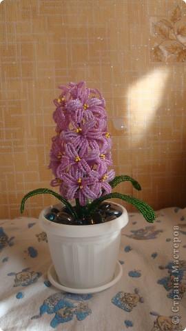 Вот такой цветочек вырос на день рождения мамы. фото 1