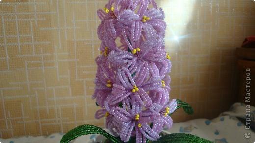 Вот такой цветочек вырос на день рождения мамы. фото 2