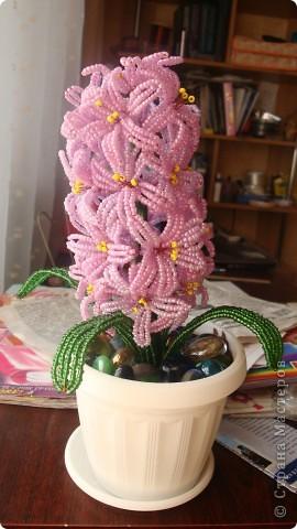 Вот такой цветочек вырос на день рождения мамы. фото 3
