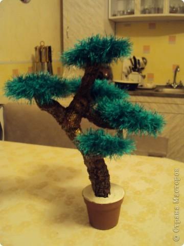 мое дерево бонсай))