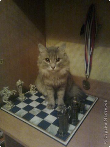 Фоторепортаж Новая шахматная
