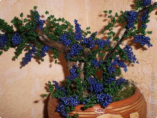 Виноградная лоза Бисер