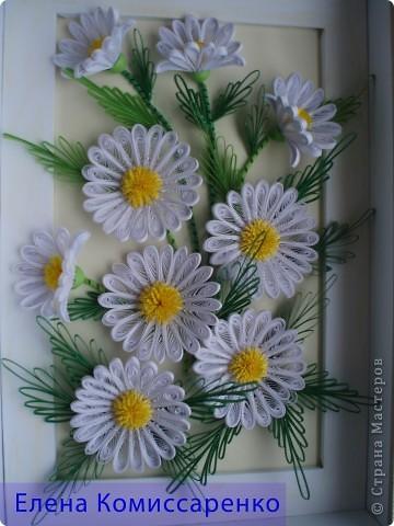 Иногда  задаю себе вопрос, что у нас  асоциируется  с летом. Конечно же солнце, зеркальная   река, зеленые луга .......,покрытые  самыми  летними и красивыми цветами---ромашками. Ромашка очень простой, с виду не замысловатый, но довольно интересный цветок.  Эта работа посвящается  именно им.  Работа выполнена в технике Квиллинг. фото 1