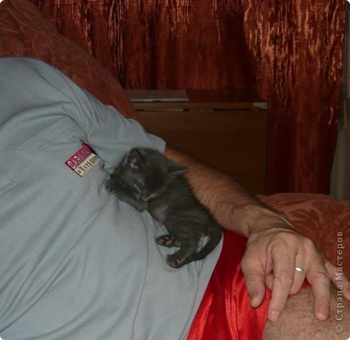 """Хочу познакомить вас с нашим котом Кузьмой. Это история небольшая, всего 2-летней жизни. До него у нас был кот Василий. Англичанин с русским именем. Заболел, умер. Переживали с мужем, как по члену семьи. В школе девочка из неблагополучной семьи предложила котенка. Я сказала: """"Если серый -- приноси"""". Как увидела, что серый, даже не рассматривая увезла домой. фото 3"""