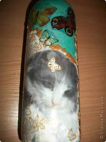День всех котов: 1 марта!  фото 2