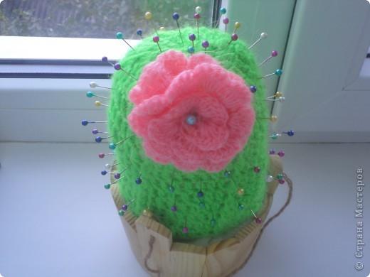 Любимый кактус! фото 1