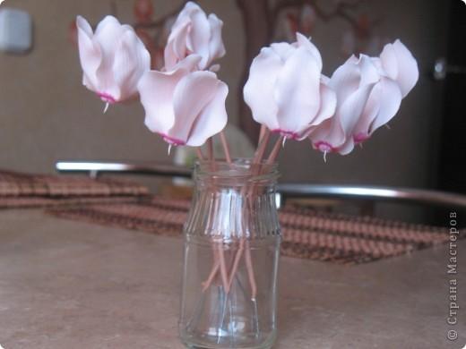 Цикламен розовый фото 4