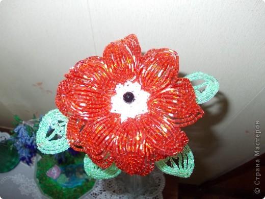 Аленький цветочек. фото 2
