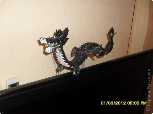в год дракона со своим драконом. фото 1