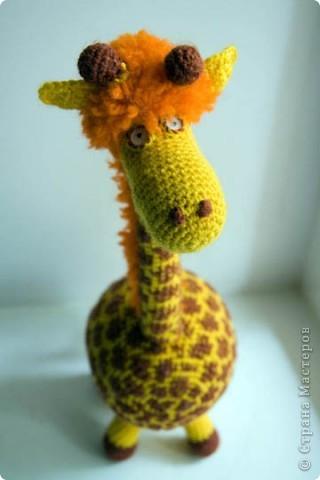 Жирафа фото 1