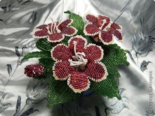 Глоксиния схема плетения