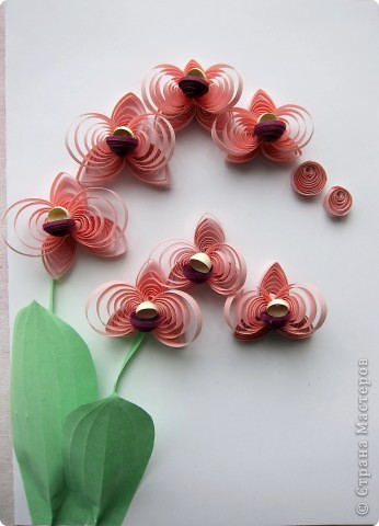 Розовые орхидеи фото 1
