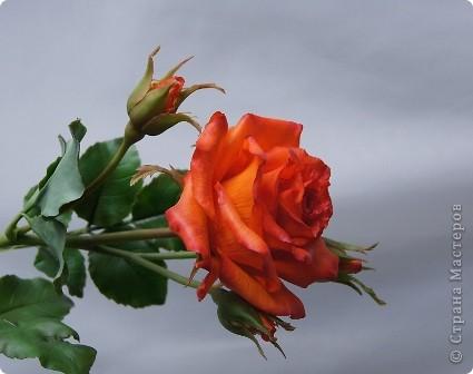 Вот такое розовое настроение у меня было... и вот что из этого получилось. Все цветы слеплены из готовых полимерных глин(холодный фарфор) modern clay, luna clay, Thai clay. фото 7