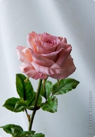 Поделка изделие 8 марта Валентинов день День рождения День учителя Свадьба Лепка розовое настроение  Фарфор холодный фото 3