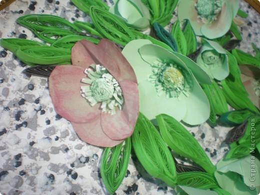 Многие вспомнят те времена, когда к 8 Марта привозились эти цветы к нам.Среди веточек мимозы они притягивали как магнит.Очень приятно было среди зимы держать в ладонях непонятное чудо такое. фото 2