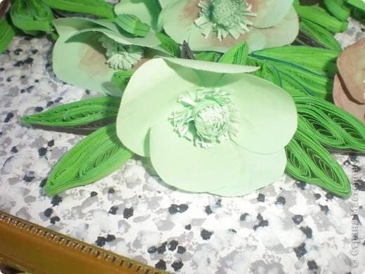 Многие вспомнят те времена, когда к 8 Марта привозились эти цветы к нам.Среди веточек мимозы они притягивали как магнит.Очень приятно было среди зимы держать в ладонях непонятное чудо такое. фото 3