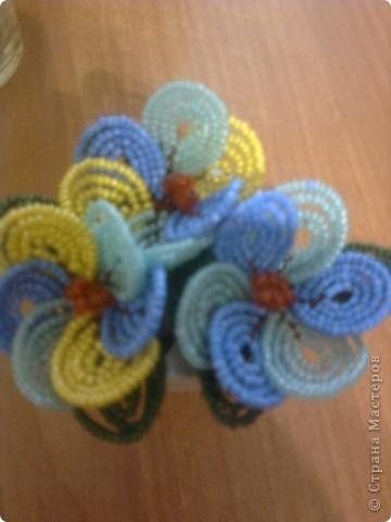 Мої квіти!!! фото 7