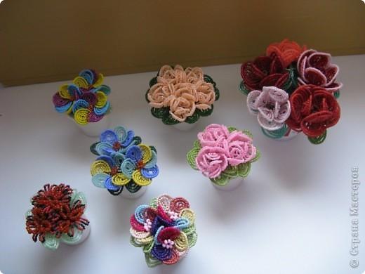 Мої квіти!!! фото 1