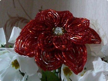 Мой первый опыт в работе с техникой французского плетения. Строго не судите, пока учусь, буду совершенствовать свои навыки. (из бисера только красный цветок, белые использованы для фона) фото 2