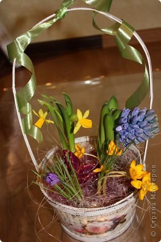 У нас уже весна! мы сами делаем такие композиции, будем учителей поздравлять...сейчас у меня на балконах 20 таких корзинок ))))) фото 1