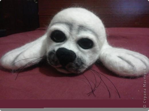 тюленьчик фото 2