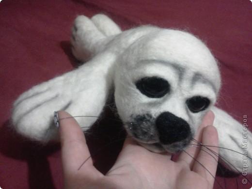 тюленьчик фото 1