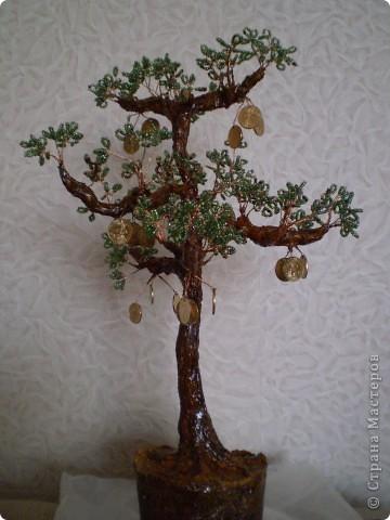 Денежная сосна. фото 1