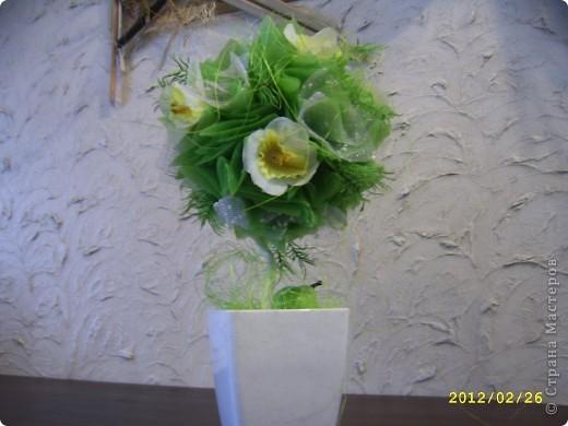 Мои топиарии!))))) Вишневое деревце фото 2