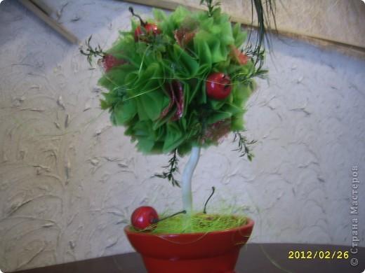 Мои топиарии!))))) Вишневое деревце фото 1